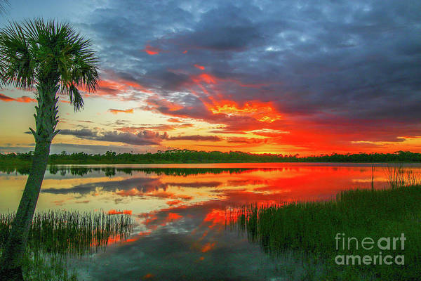 Photograph - Red Sky And Palm Sunset by Tom Claud