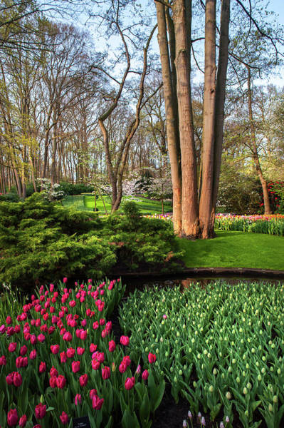 Photograph - Red Splash Among Greenery In Keukenhof by Jenny Rainbow