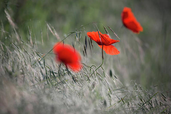 Photograph - Red Splashes 1 by Vlad Sokolovsky