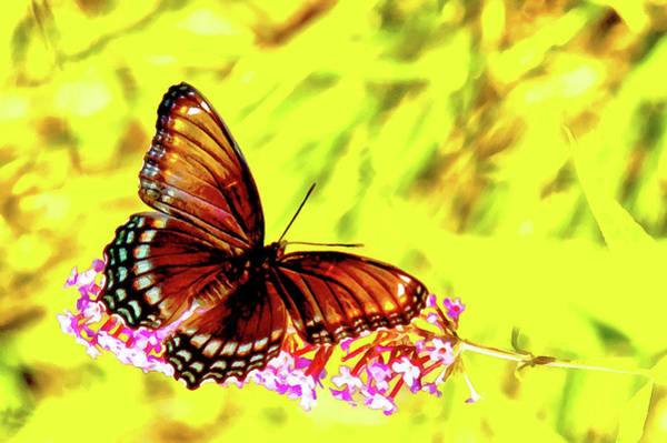 Artemis Photograph - Red Spotted Admiral On Butterfly Bush by Jeff Folger