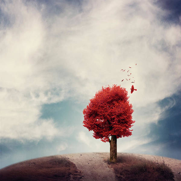 Photograph - Red Tree And Red Birds, Sky And Earth by Copyright Anna Nemoy(xaomena)