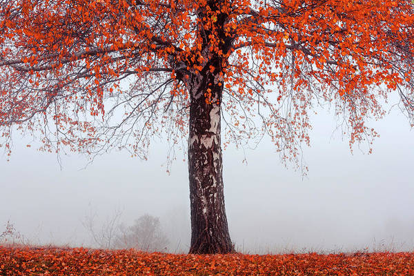 Photograph - Red Tree by Evgeni Dinev