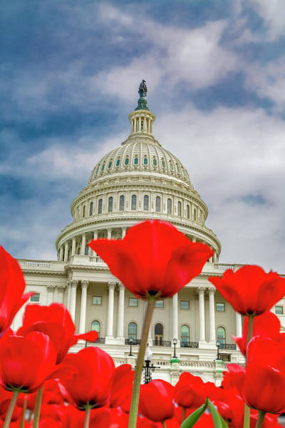 Us Capitol Photograph - Red Tulip Capitol  by Betsy Knapp