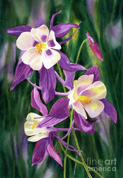 Wall Art - Painting - Red Violet Columbine Blossoms With Dark Backgroundh by Sharon Freeman