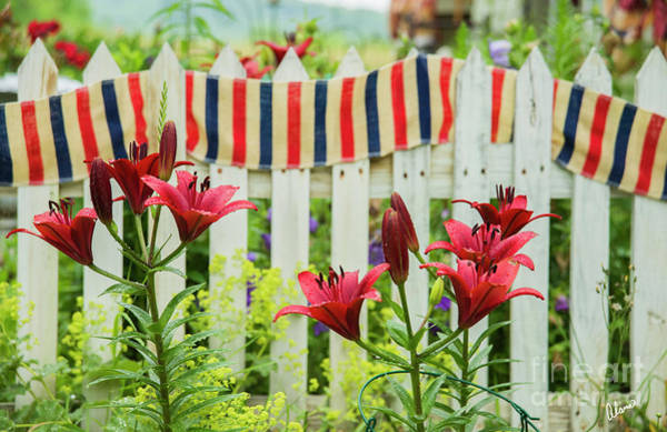 Photograph - Red White And Blue by Alana Ranney