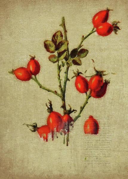 Digital Art - Redcurrant by Jan Keteleer