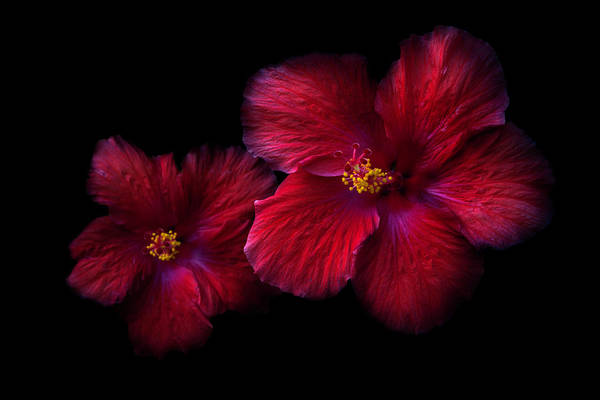 Photograph - Reds In Nature by Debra and Dave Vanderlaan