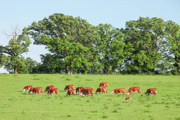 Photograph - Reds On Green by Todd Klassy