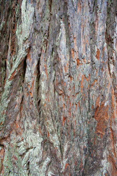 Photograph - Redwood Bark by Mark Duehmig