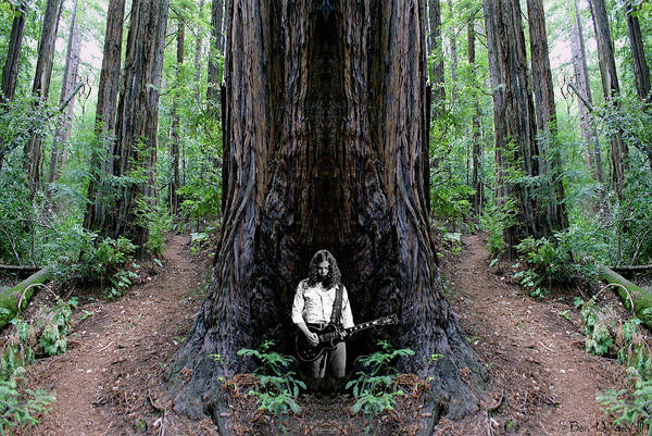 Photograph - Redwood Jones by Ben Upham