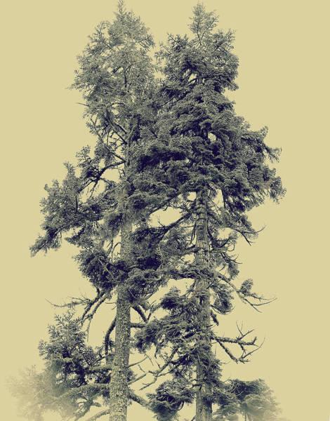 Wall Art - Photograph - Redwood Trees, In Yoemite by Hyuntae Kim