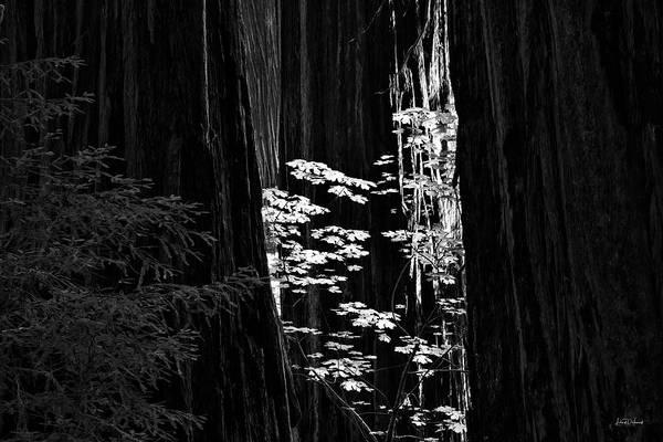 Wall Art - Photograph - Redwoods Light And Texture by Leland D Howard