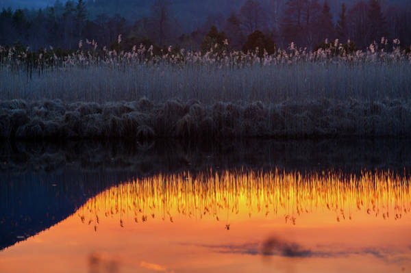 Moored Photograph - Reed Reflection In Bavarian Moor Lake by Olaf Broders
