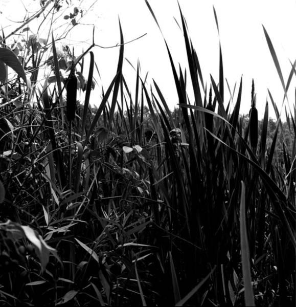 Wall Art - Photograph - Reeds by Robert Natkin