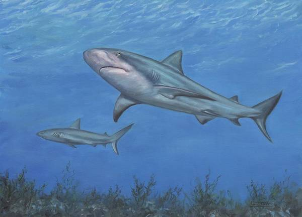 Painting - Reef Shark by David Stribbling