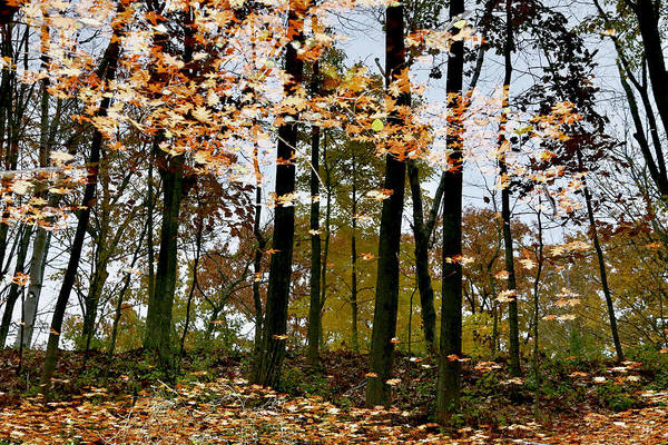 Photograph - Reflecting On Autumn by John Meader