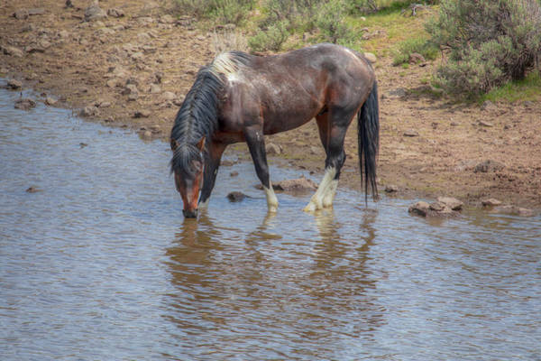 Wall Art - Photograph - Reflecting - South Steens Mustangs 01006 by Kristina Rinell