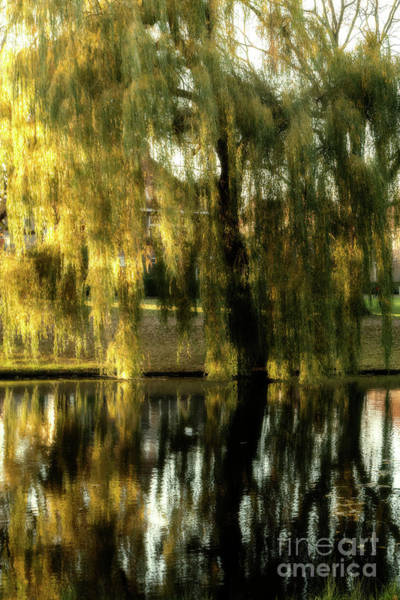 Wall Art - Photograph - Reflecting Weeping Willow Tree by Patricia Hofmeester