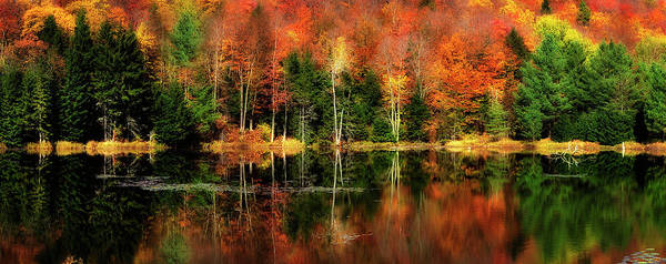 Wall Art - Photograph - Reflection Of Fall Foliage by Shobeir Ansari