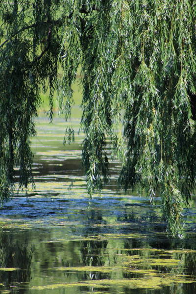 Photograph - Reflection Of Weeping Willow Over Pond by Colleen Cornelius