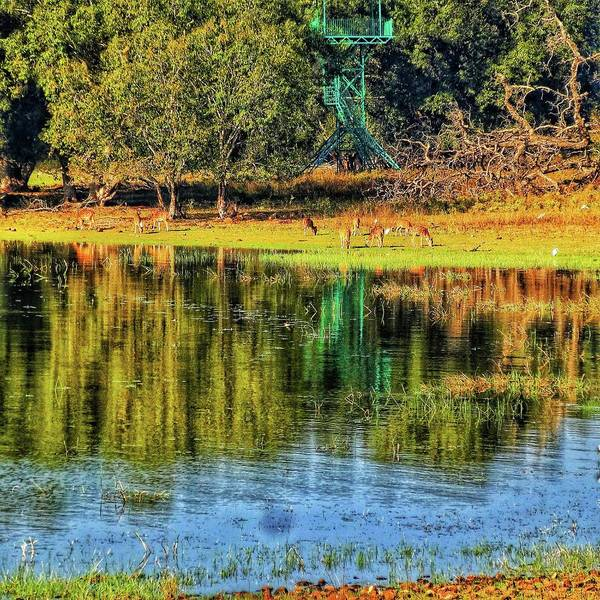 Photograph - Reflections by AE collections