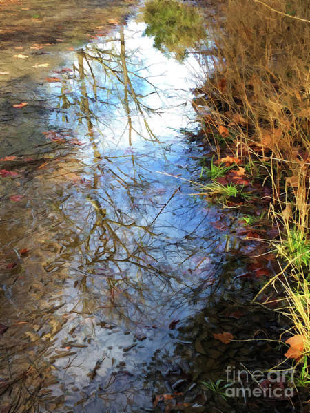 Photograph - Reflections In A Puddle by Kerri Farley