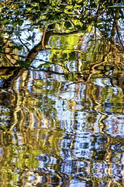 Photograph - Reflections In Blue by Kate Brown