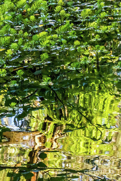Photograph - Reflections In Green by Kate Brown