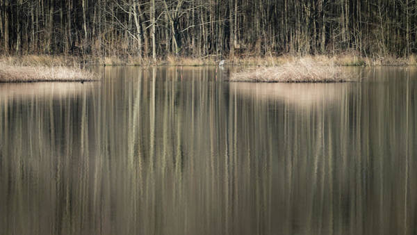 Photograph - Reflections In The Wetlands by Todd Henson