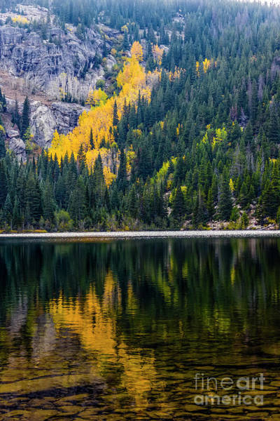 Photograph - Reflections by Jon Burch Photography
