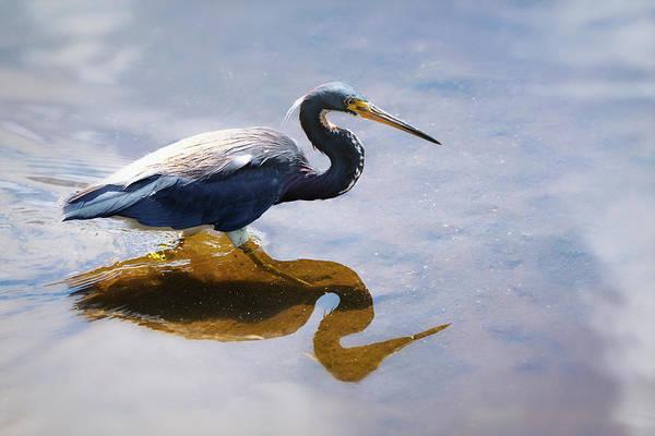 Wall Art - Photograph - Reflections Of Tri-colored Heron by Saija Lehtonen