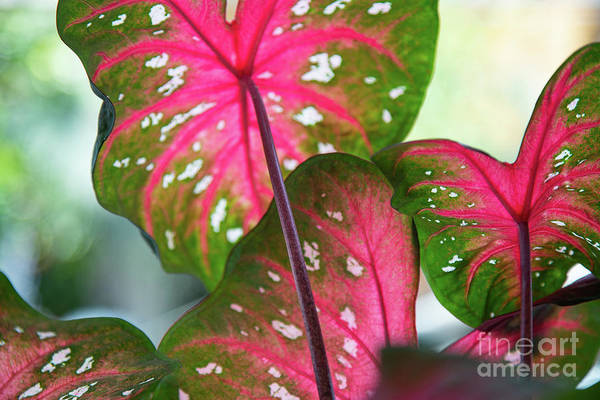 Photograph - Reflections On The Calming Of Pink by Marilyn Cornwell