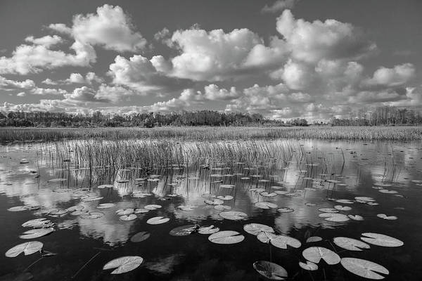 Wall Art - Photograph - Reflections Over The Marsh Black And White  by Debra and Dave Vanderlaan