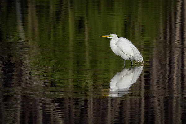 Photograph - Reflections by Van Sutherland