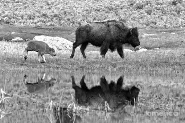 Photograph - Reflections With The Yellowstone Red Dog Black And White by Adam Jewell