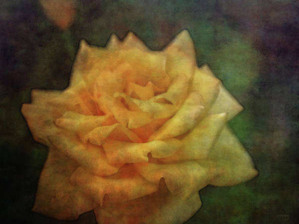 Photograph - Reflective 4694 Idp_2 by Steven Ward