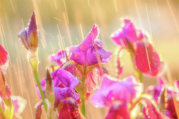 Photograph - Refreshing Spring Rain by Leland D Howard