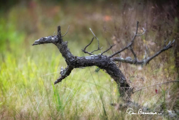 Photograph - Reindeer 0843 by Dan Beauvais