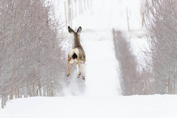 Wall Art - Photograph - Reindeer In Training by Mike Dawson