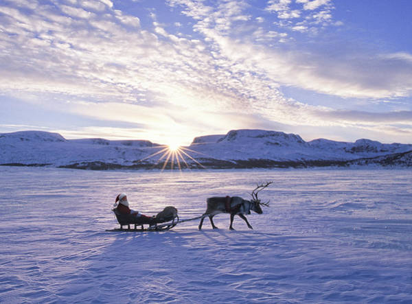 Pulling Photograph - Reindeer Pulling Santa On Sled Over by Per Breiehagen