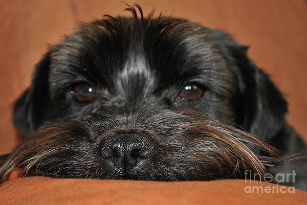 Wall Art - Photograph - Relaxing Dog by Petra Koehler Rose