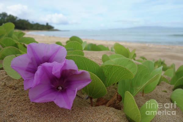 Photograph - Relaxing Flowers In The Sand by Wilko Van de Kamp