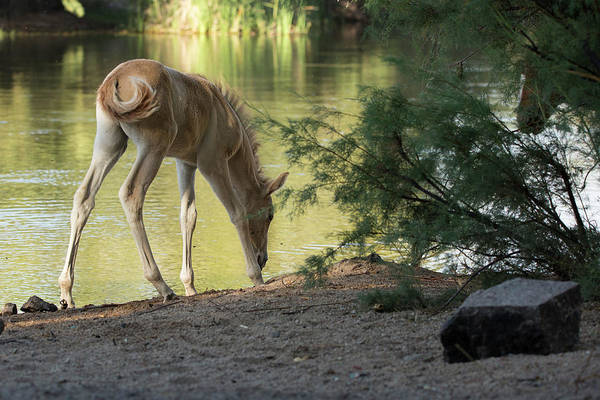 Wall Art - Photograph - Relaxing On The River by Sue Cullumber