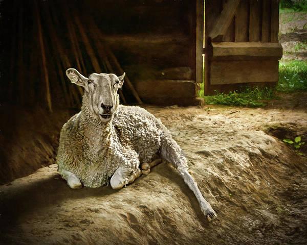 Wall Art - Photograph - Rembrandt - A Sheep by Nikolyn McDonald