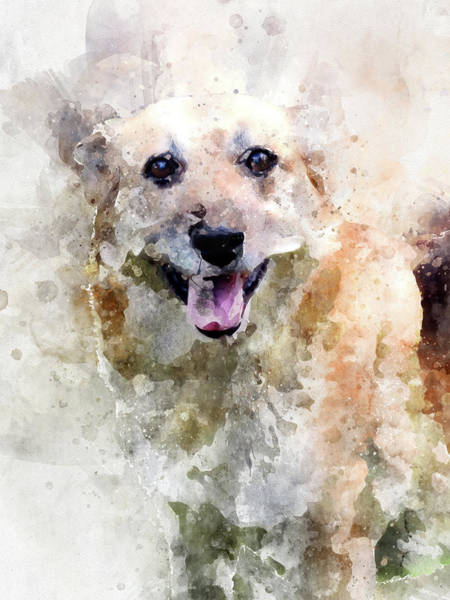 Digital Art - Portrait Of Happy Street Dog In The Argentine Patagonia - Watercolor Effect by Fine Art Photography Prints By Eduardo Accorinti