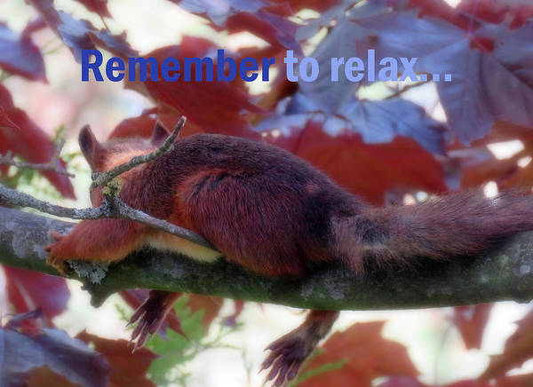 Photograph - Remember To Relax  by Johanna Hurmerinta