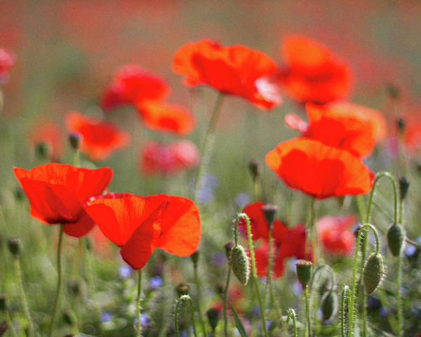Photograph - Remembrance Day by S0ulsurfing - Jason Swain