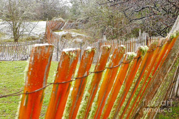 Photograph - Remnant Fence Line by Lexa Harpell