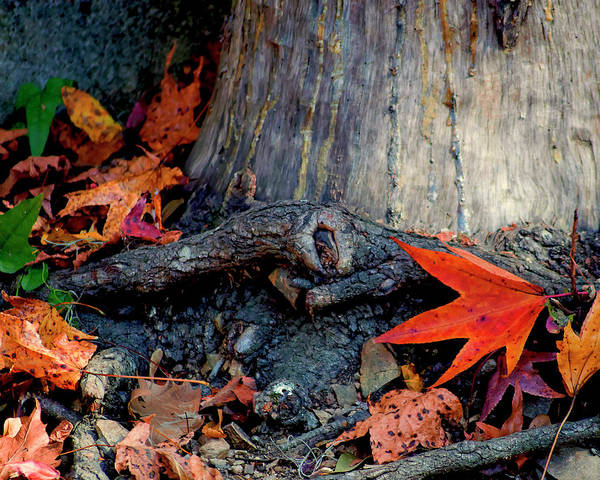 Photograph - Remnants Of Autumn by Susan Callaway