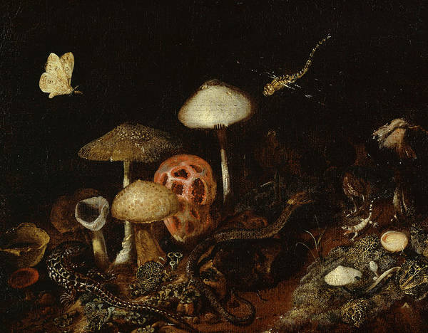 Wall Art - Painting - Reptiles, Mushrooms And Butterflies by Otto Marseus van Schrieck